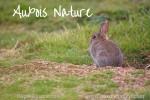 Auxois Nature m'aide à être un meilleur photographe